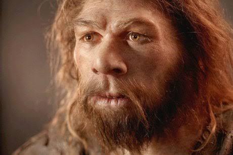 Homo Neanderthalensis 's photo